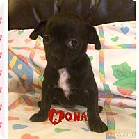 Adopt A Pet :: Mona - Brea, CA