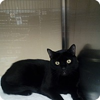Adopt A Pet :: Archimedes - New York, NY