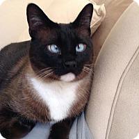 Adopt A Pet :: Frankie - Pinckney, MI