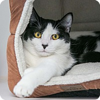 Adopt A Pet :: Patches - Staunton, VA