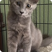 Adopt A Pet :: Stormy - Houston, TX