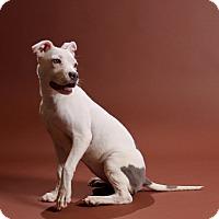 Adopt A Pet :: Chloe - Carlisle, TN