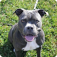 Adopt A Pet :: Sable - Staunton, VA