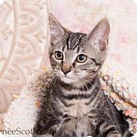 Adopt A Pet :: Indy - San Jose, CA