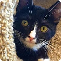 Adopt A Pet :: LUNA - Yucca Valley, CA