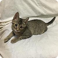 Adopt A Pet :: Jupiter - Washington, DC