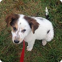 Adopt A Pet :: Sammy - Kingman, KS