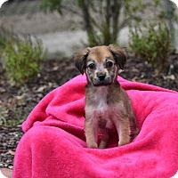 Adopt A Pet :: Mali - Groton, MA
