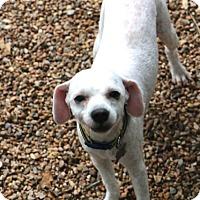 Adopt A Pet :: Edlum - Woonsocket, RI