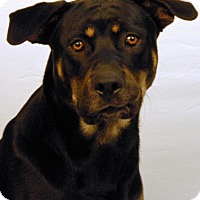Adopt A Pet :: Simba - Newland, NC