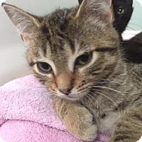 Adopt A Pet :: Camo - Columbia, SC