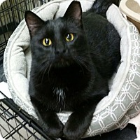 Adopt A Pet :: Jimmy - Montgomery City, MO