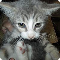 Adopt A Pet :: Truffles - New Smyrna Beach, FL