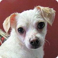 Adopt A Pet :: Anya - Rancho Santa Fe, CA