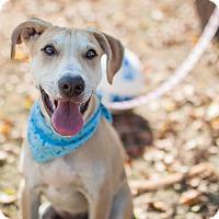 Adopt A Pet :: Leo - Nanaimo, BC