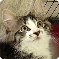 Adopt A Pet :: LUCKIE - 2013 - Hamilton, NJ