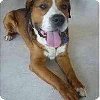 Adopt A Pet :: Disco - Pasadena, CA
