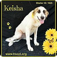 Adopt A Pet :: Keisha - Plano, TX
