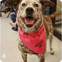 Adopt A Pet :: Maizy - Arlington, TX