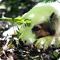 Adopt A Pet :: JL - PENDING - Savannah, GA