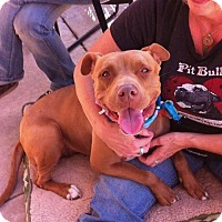 Adopt A Pet :: XENA - Carpenteria, CA