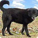 Adopt A Pet :: SEBASTIAN