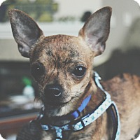 Adopt A Pet :: Lenny - Chicago, IL