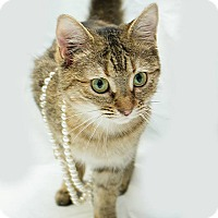 Adopt A Pet :: Kayla - Schererville, IN