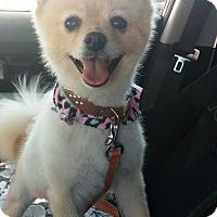 Adopt A Pet :: Jazzy - Corona, CA