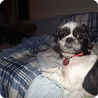 Adopt A Pet :: Cricket - Quincy, IN
