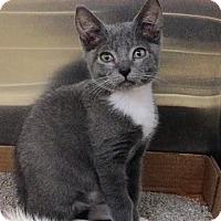Adopt A Pet :: Moon - East Brunswick, NJ