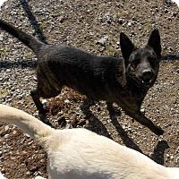 Adopt A Pet :: Storm - Lewisburg, TN