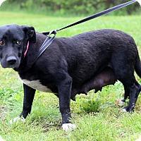 Adopt A Pet :: Hailey - Waldorf, MD
