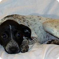 Adopt A Pet :: Camile - Modesto, CA
