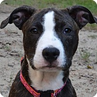 Adopt A Pet :: Lala - Olive Branch, MS