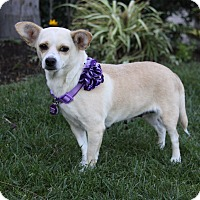 Adopt A Pet :: TATIANA - Newport Beach, CA