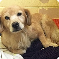 Adopt A Pet :: Haley - BIRMINGHAM, AL