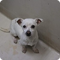 Adopt A Pet :: Aiden - Middlebury, CT