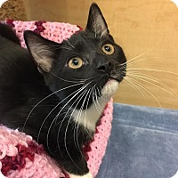 Adopt A Pet :: Plum - Merrifield, VA