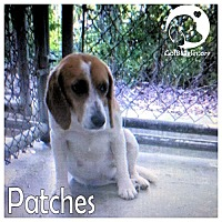 Adopt A Pet :: Patches - Pittsburgh, PA
