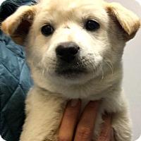 Adopt A Pet :: Kate - Thousand Oaks, CA