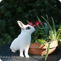 Adopt A Pet :: Katherine - Livermore, CA