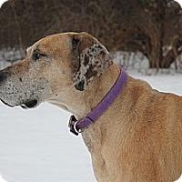 Adopt A Pet :: Blossom - Woodstock, IL