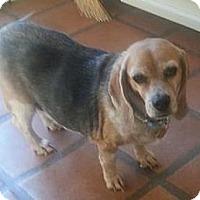 Adopt A Pet :: Abby Gail - Phoenix, AZ
