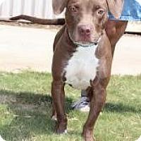 Adopt A Pet :: Ruby - Justin, TX