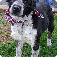 Adopt A Pet :: Freddie URGENT - Sacramento, CA