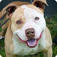 Adopt A Pet :: Alfonso - Scottsdale, AZ