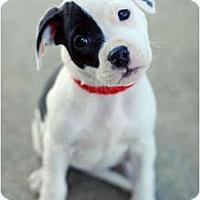 Adopt A Pet :: Annie - Reisterstown, MD