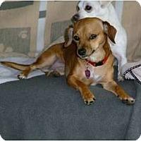 Adopt A Pet :: Missy Adopted - Nine Mile Falls, WA