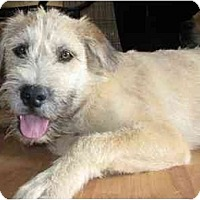 Adopt A Pet :: Tanner - Golden Valley, AZ